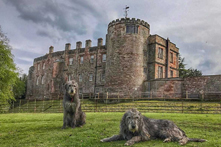 Things to do in Appleby: Eden Valley's Appleby Castle